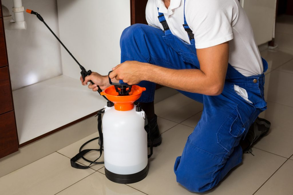 professional pest removal company boulder co