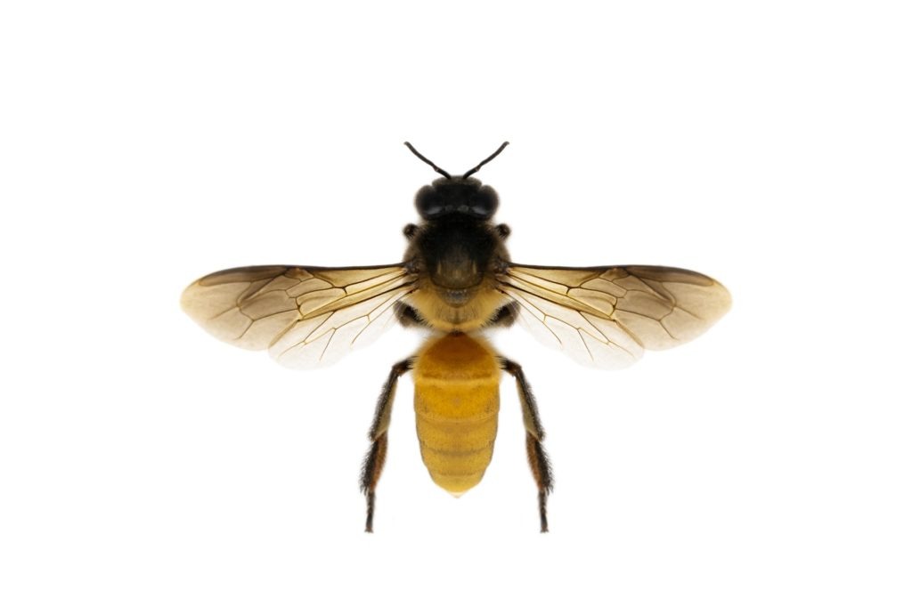 bee removal boulder county