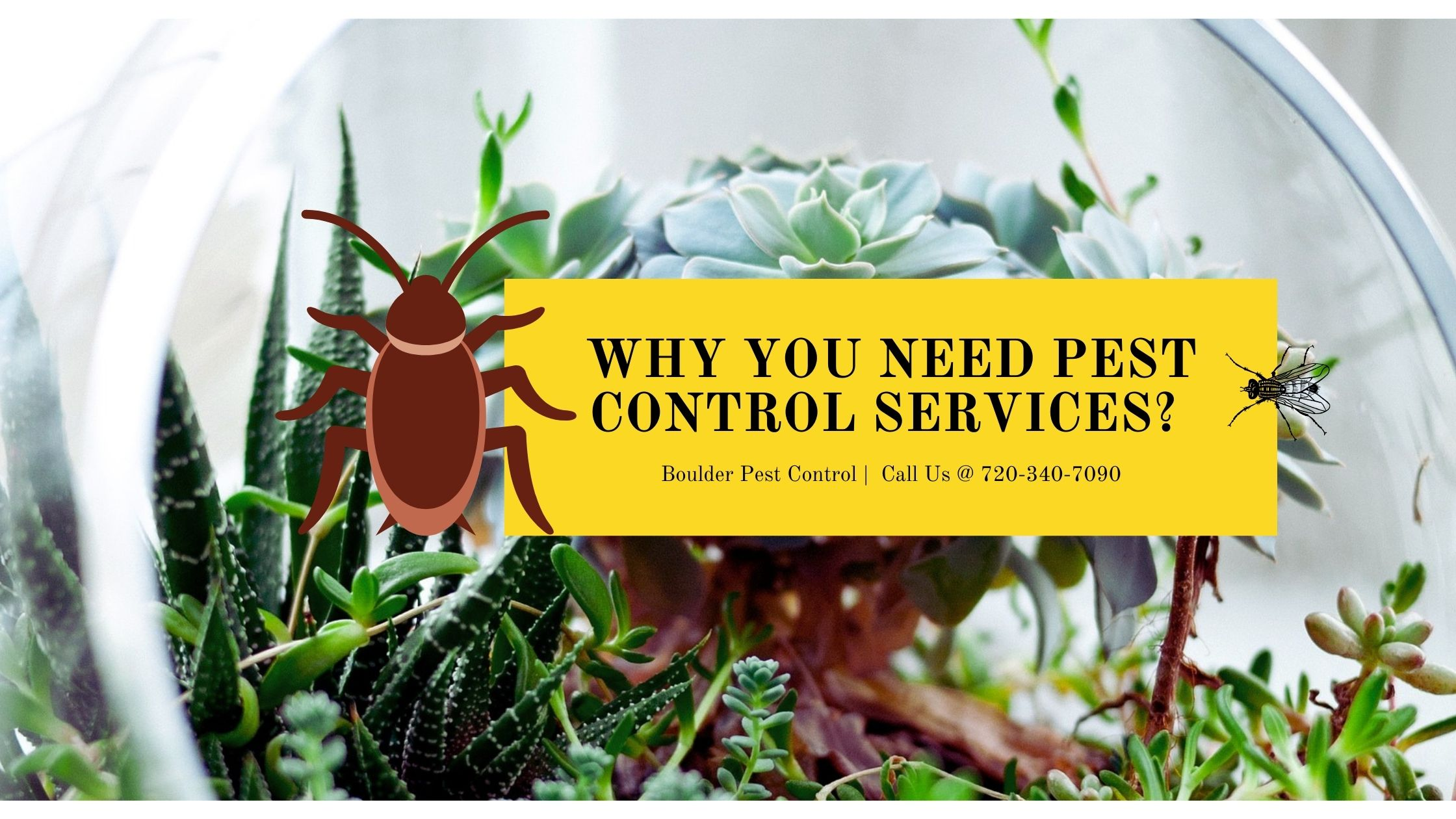 5 Reasons Why Everyone Needs Pest Control Services in Boulder County