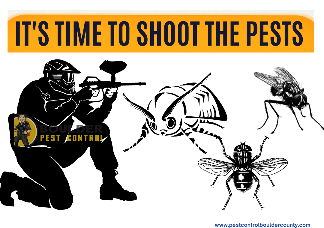 Shoot the pests with Pest Control Services in Boulder County
