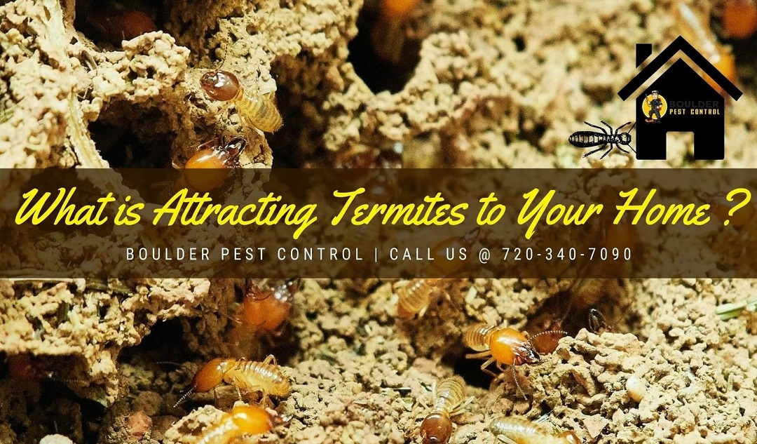 Top Things That Could Be Attracting Termites to Your Home