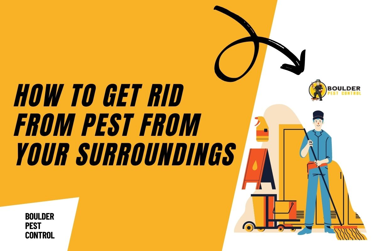 Tips to Get Rid from Pests in Boulder County