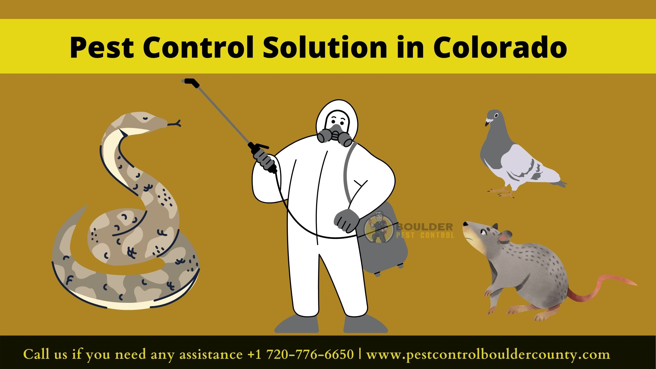 Pest Control Solution for Pigeons, Gopher Snakes, Centipedes, and Voles in Colorado