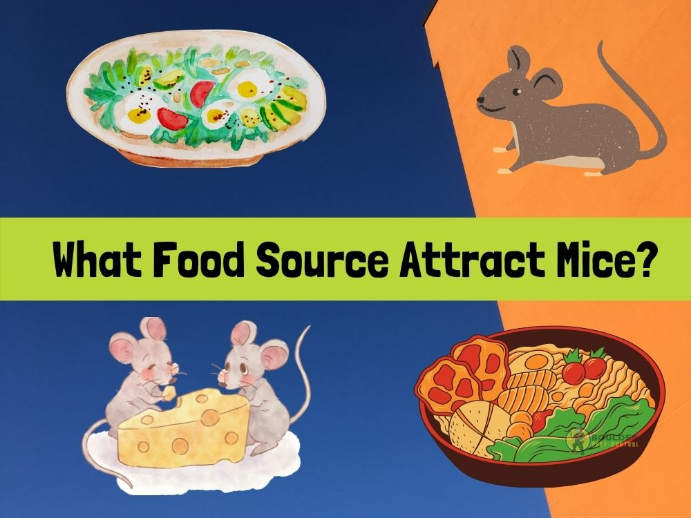 What Does Mice Eat? All You Need to Know