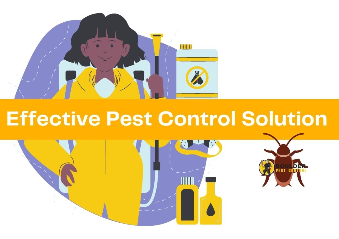 Effective Pest Control Solution in Boulder County