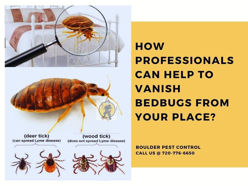 How Do Professionals Pest Control Exterminators Kill Bedbugs
