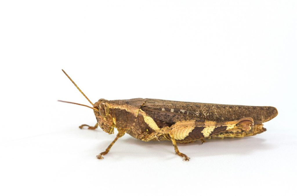 cricket.jpg